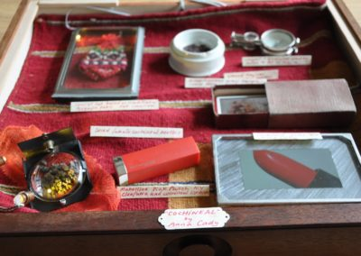 Water Cabinet - Exhibition Drawer 7: Cochineal by Anna Cady
